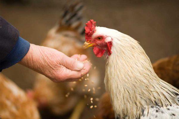 Beter kip dan kaas. Vuistregels voor een klimatarier